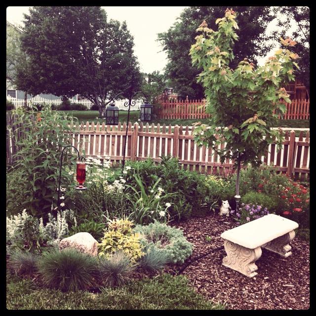 donnas memorial garden is going crazy this spring