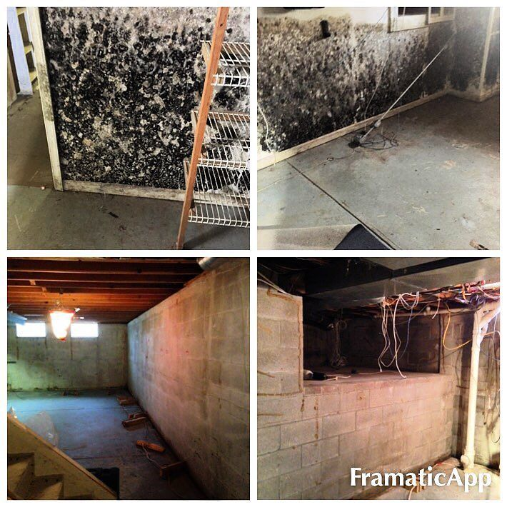 Basement Mold Removal Demolition   Completed In One Day   Nice Job Crew!  #roc