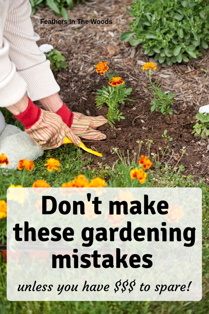 11 garden mistakes that will cost you $$$ | Gardening for beginners,  Gardening tips, Planting herbs