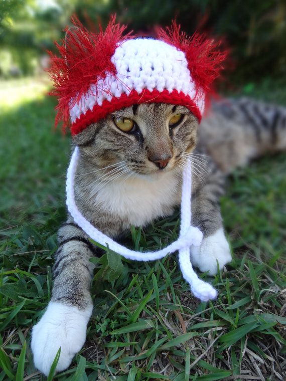 Custom Hats for Cats and Dogs - The White and Red Wackadoodle Cat and Dog Hat - Cat Dog Costume on Etsy, $14.00