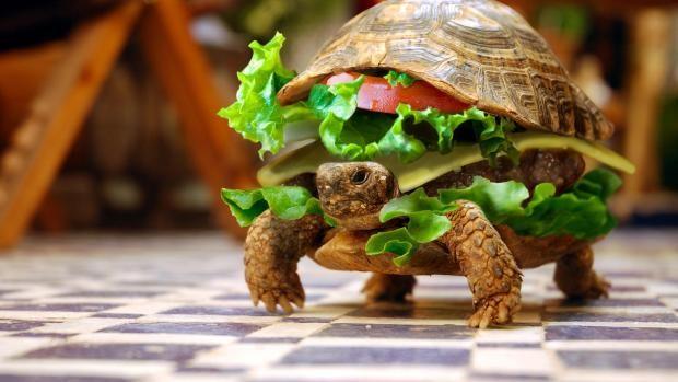 Intenta colar una tortuga en un avión ocultándola en una hamburguesa