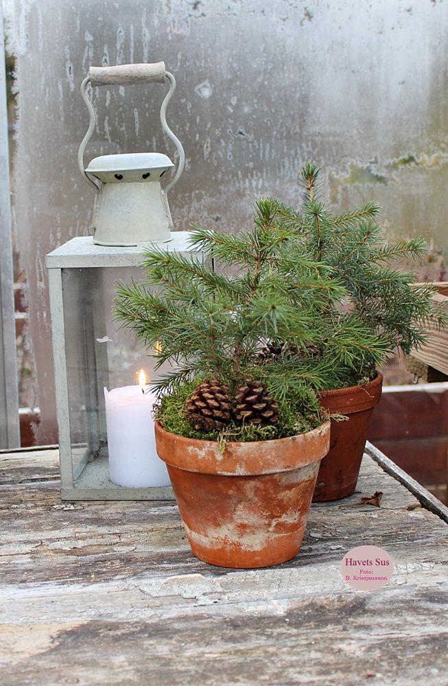 Winter - vinter - Greenhouse - drivhus - frost- Havets Sus - Denmark