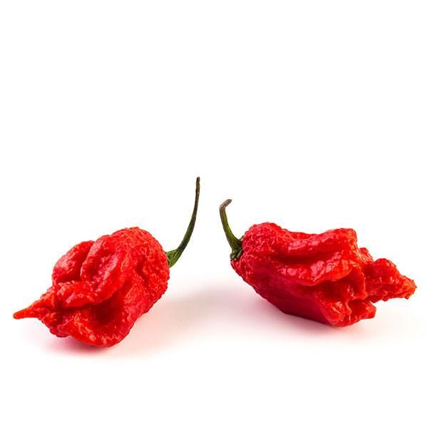 Guinness Book of World Records - Carolina Reaper is the world's hottest pepper! 1,569,300 Scoville Units (SHU) and easy to grow. Free seeds with every order!