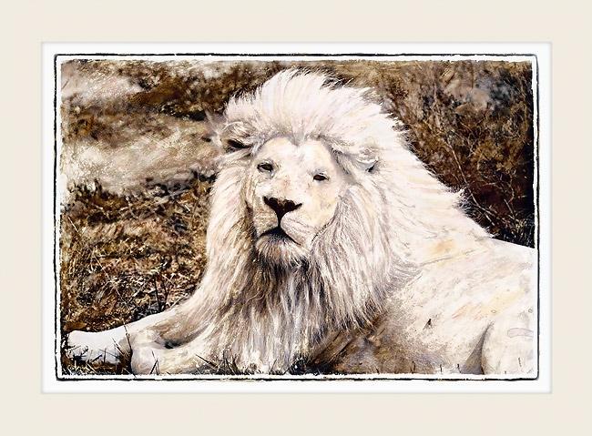 African Wildlife - WHITE LION  - Marlene Neumann Fine Art Photography  www.marleneneumann.com  neumann@worldonline.co.za