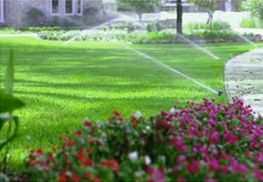 Need lawn fertilizer Service for your lawn.Green T provides professional lawn care services including lawn fertilization, weed control, aeration, grub control, and crabgrass control.