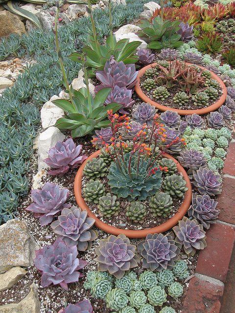Succulents in the Sherman garden in Corona Del Mar