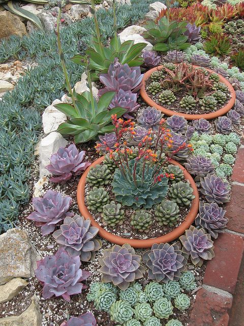 Succulents in the Sherman garden in Corona Del Mar