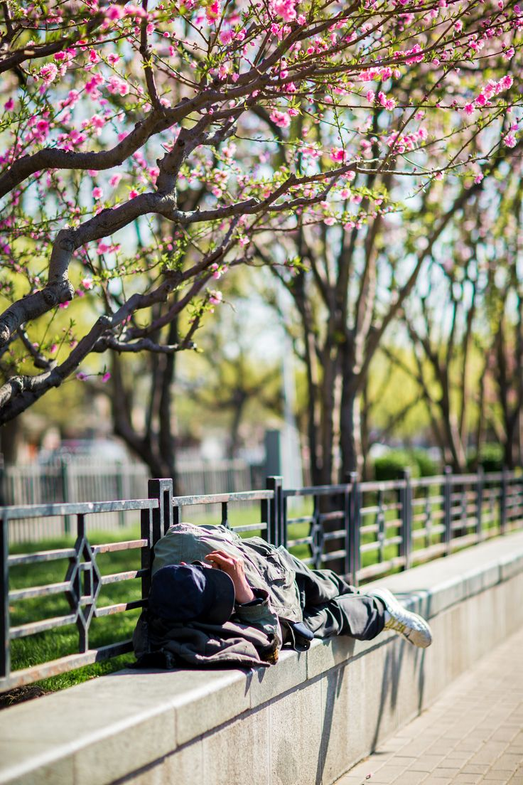 御花园 Imperial Garden i 北京市, 北京市