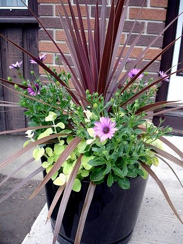 Ideas for potted flowers!!!