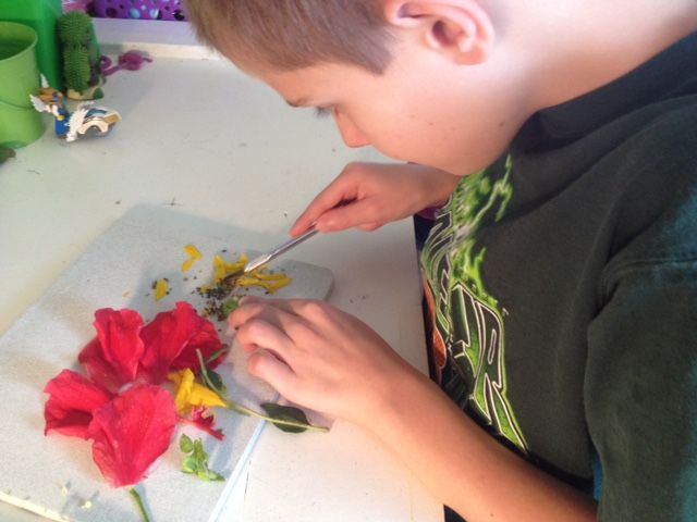 Science:  Flower Dissection