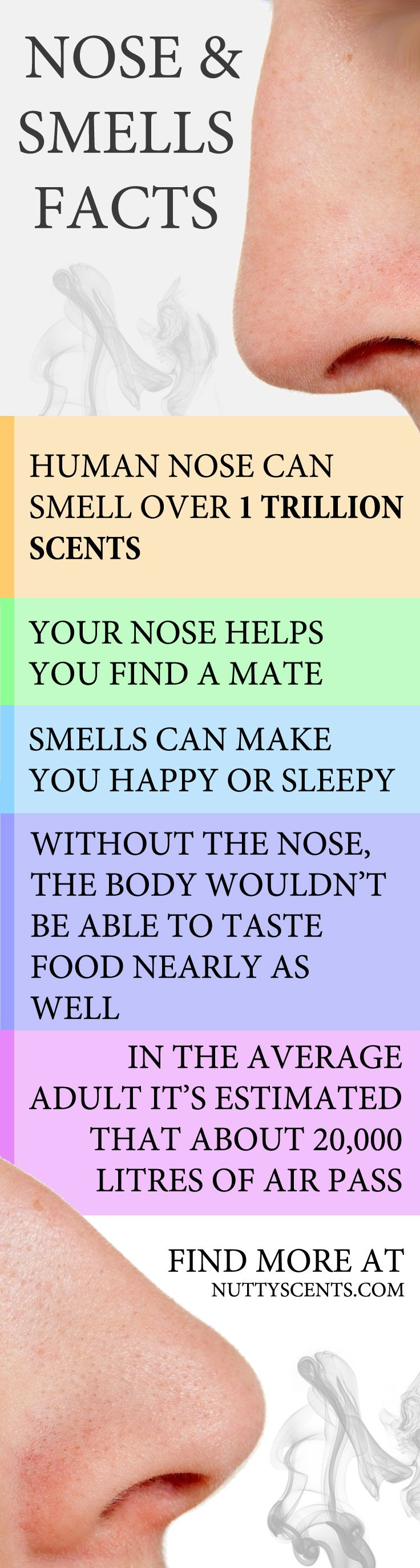 Fact #1 The human nose can smell over 1 trillion scents, according to researchers.