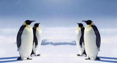 The Wild Extremes of Antarctica | Life Lists | Smithsonian Magazine