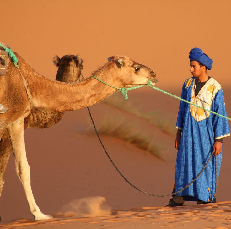 Berber And Camel, The Sahara Desert, Morocco