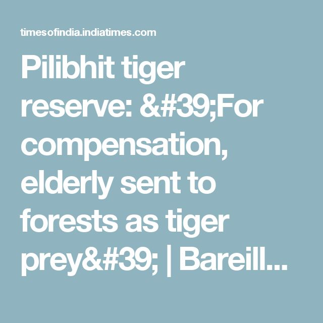 Pilibhit tiger reserve: 'For compensation, elderly sent to forests as tiger prey' | Bareilly News - Times of India