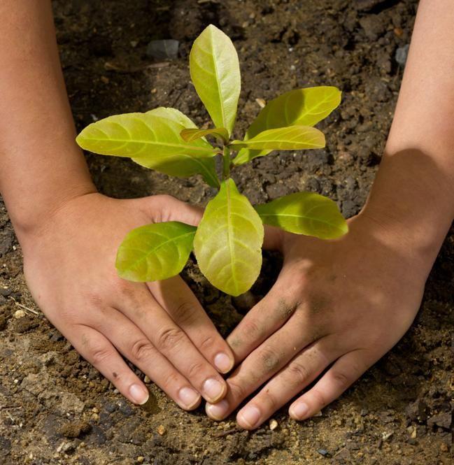 ¿Sabías que el #otoño es el momento perfecto para plantar árboles y arbustos?