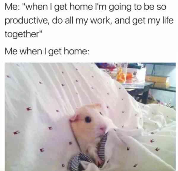 When Procrastination Hits You Hard Trenduso Procrastination Hamster Funny Meme Hilarious Mem Really Funny Memes Crazy Funny Memes Funny Relatable Memes