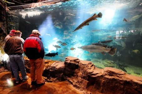 73 best aquariums fish tanks images on pinterest for Pool show on animal planet