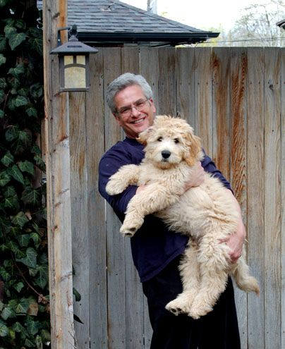 These Goldendoodles are way too cute!