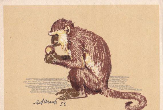 A. Laptev Monkey Postcard  1956 Izogiz Publ. by RussianSoulVintage