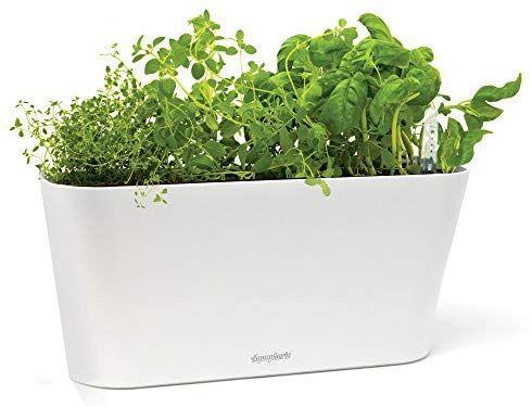 Amazon Com Aquaphoric Herb Garden Tub Self Watering 640 x 480