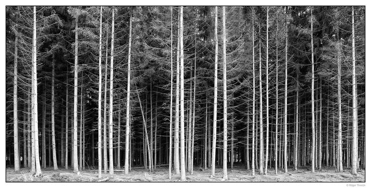 Repetition In Photography | www.pixshark.com - Images ...