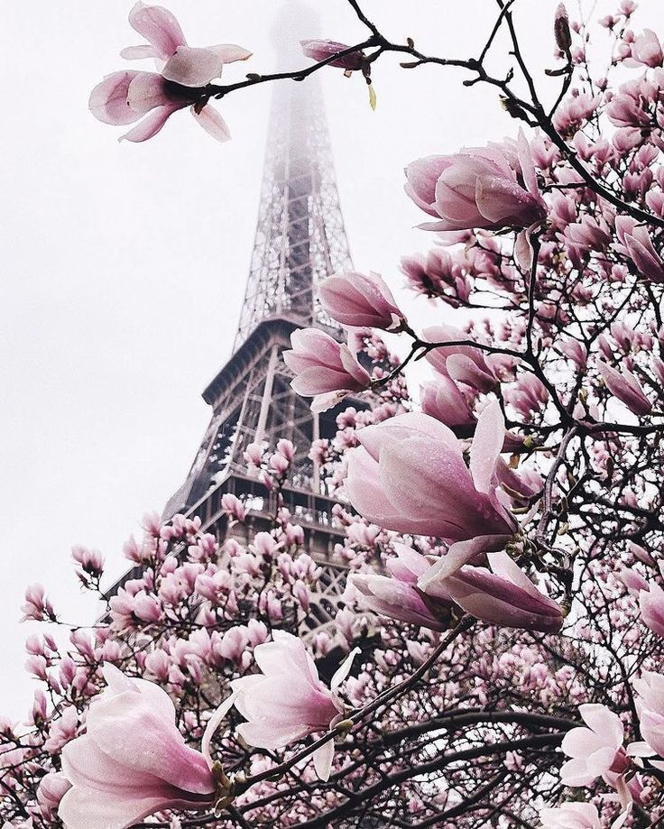 #paris #flowers