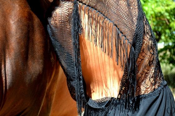 Horses in the sun. Mono de encaje negro de Zara