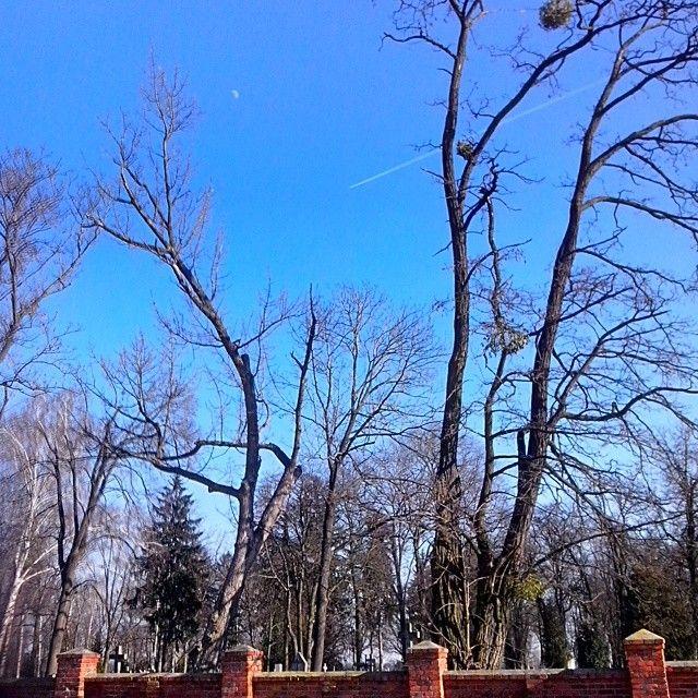 :-) wiosennie. . . . . . #sunnyday #spacer #wiosna #cmentarz #ksiezyc #samolot #blekitneniebo #bezchmurnie #drzewa #slonecznydzien #marzec #march #sun #bluesky #trees #moon #plane #blue #zyrardow #zrdw #poland #polska #mazowieckie #mazovia #walkstreet