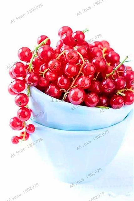 103PCS Organic Gooseberry Seeds Lantern Fruit Seed Fresh Perennial For Garden Planting Nutrient-rich Fruit Seed.