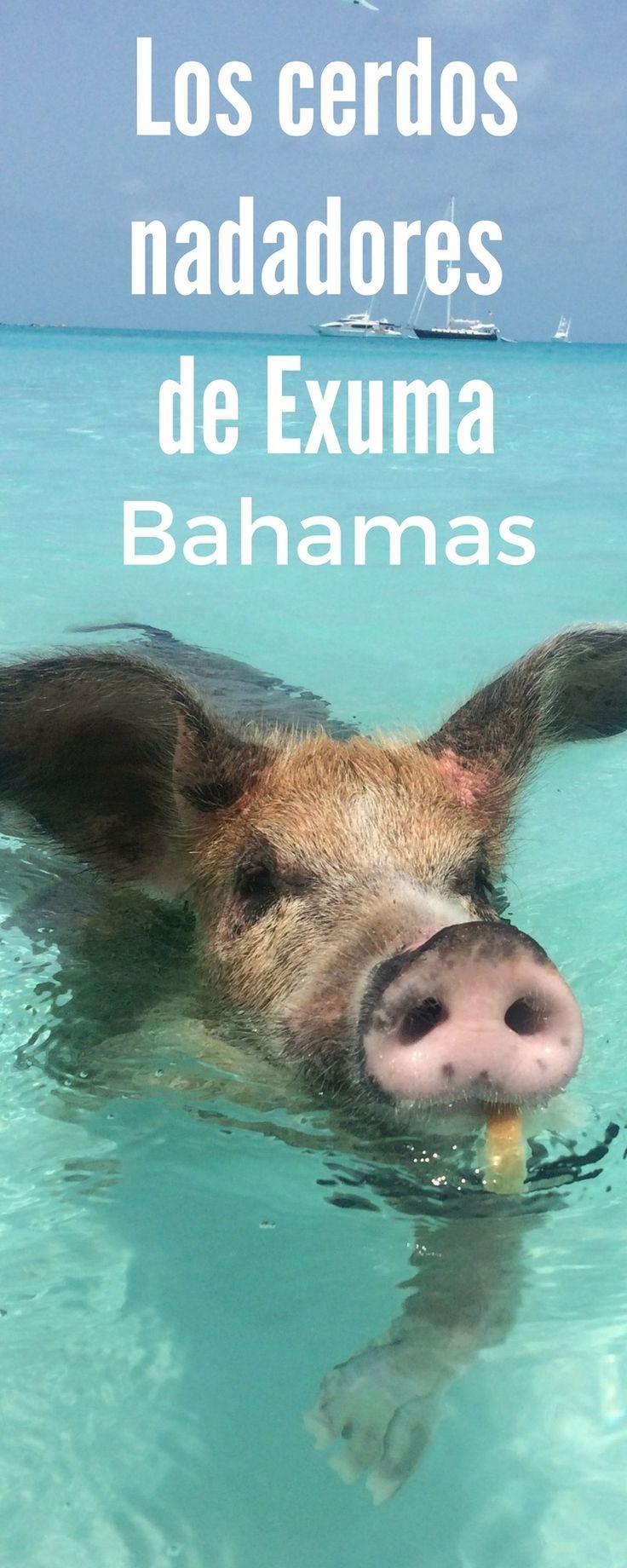 Nadando con cerdos y tiburones