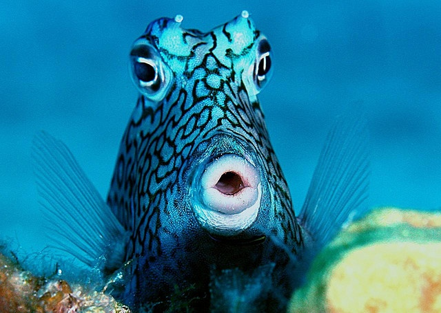53 best under the sea images on pinterest marine life for Cool saltwater fish