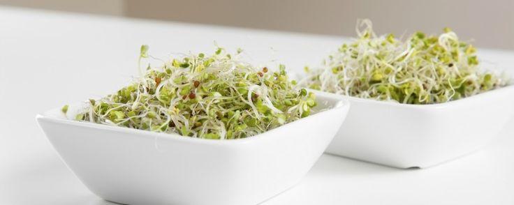 Broccolikiemen; wondertjes van gezondheid voor je hormoonbalans
