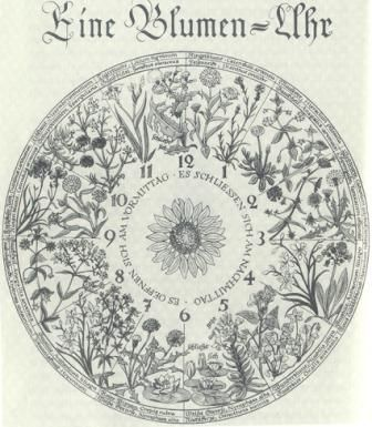 """Linnaeus' flower clock was a garden plan hypothesized by Carolus Linnaeus that would take advantage of several plants that open or close their flowers at particular times of the day to accurately predict the time. He called it specifically the Horologium Florae (lit. """"flower clock""""), and proposed the concept in the 1751 publication Philosophia Botanica."""