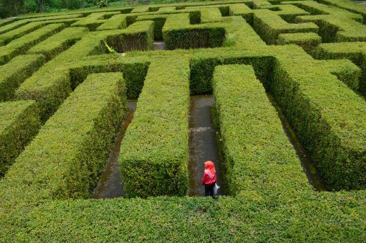Lost in Labyrinth  At Taman Labirin Coban Rondo, Batu, Malang, Jawa Timur Indonesia