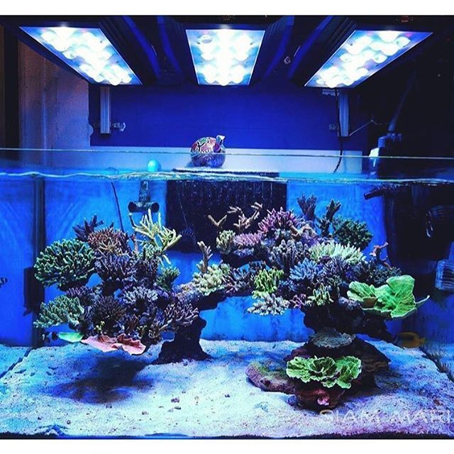 Beautiful sps dominated reef tank courtesy of nop ontour for Reef tank fish