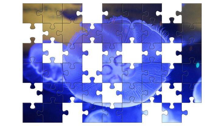 Free Jigsaw Puzzle Online - Jellyfish  #Game #JigsawPuzzle #Puzzle