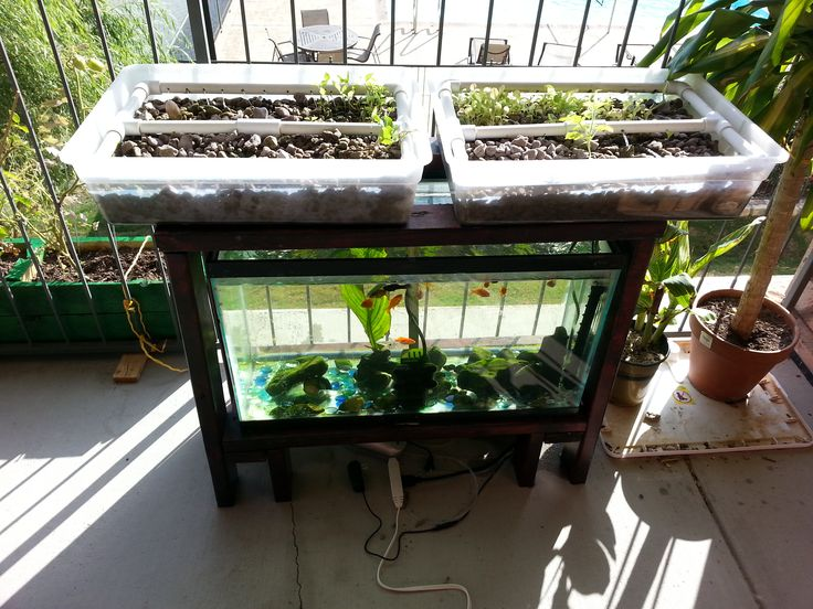 Custom fish tank aquarium stand for my aquaponics system for Fish for aquaponics