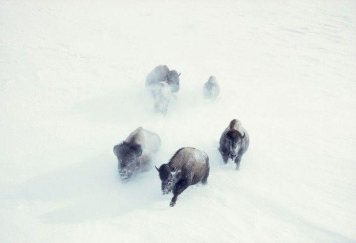 Rechtstreeks Uit De Archieven Van National Geographic, 25 Spectaculaire Foto's Die Nooit Eerder Gepubliceerd Zijn