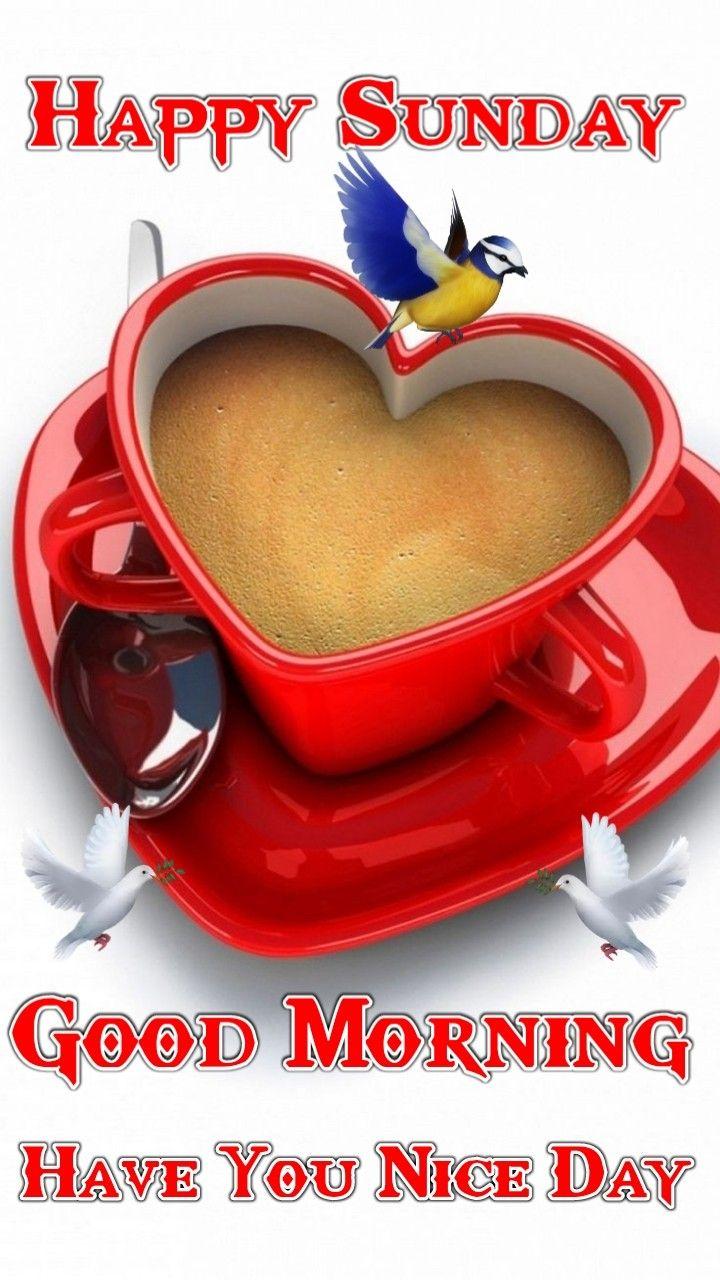 Pin By Mdmirazuddin On Good Morning Good Morning Happy Sunday