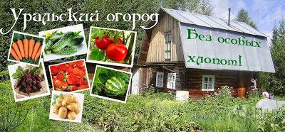 Уральский огород. Выращиваем картофель.