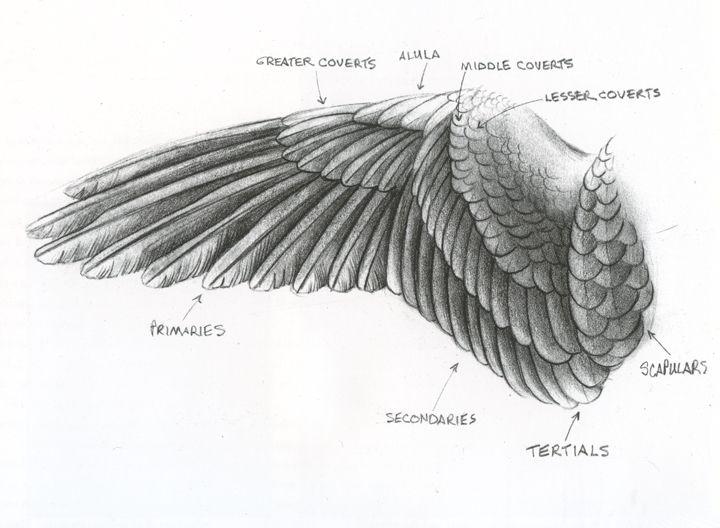 search bird wings birds wings drawing deviantart pheasant bone jewelry ...