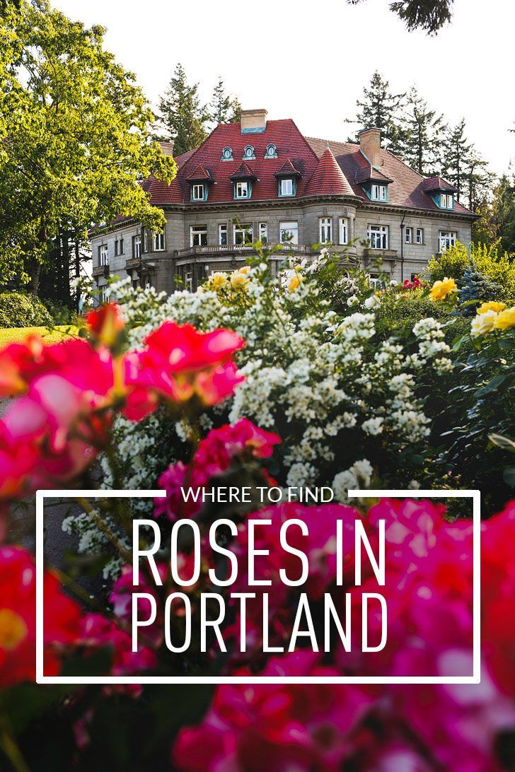 Where To Find Roses In Portland Oregon Aka Rose City Best Rose Gardens In Portland Local Adventures In Pdx Rose Garden Portland Rose City Portland Travel