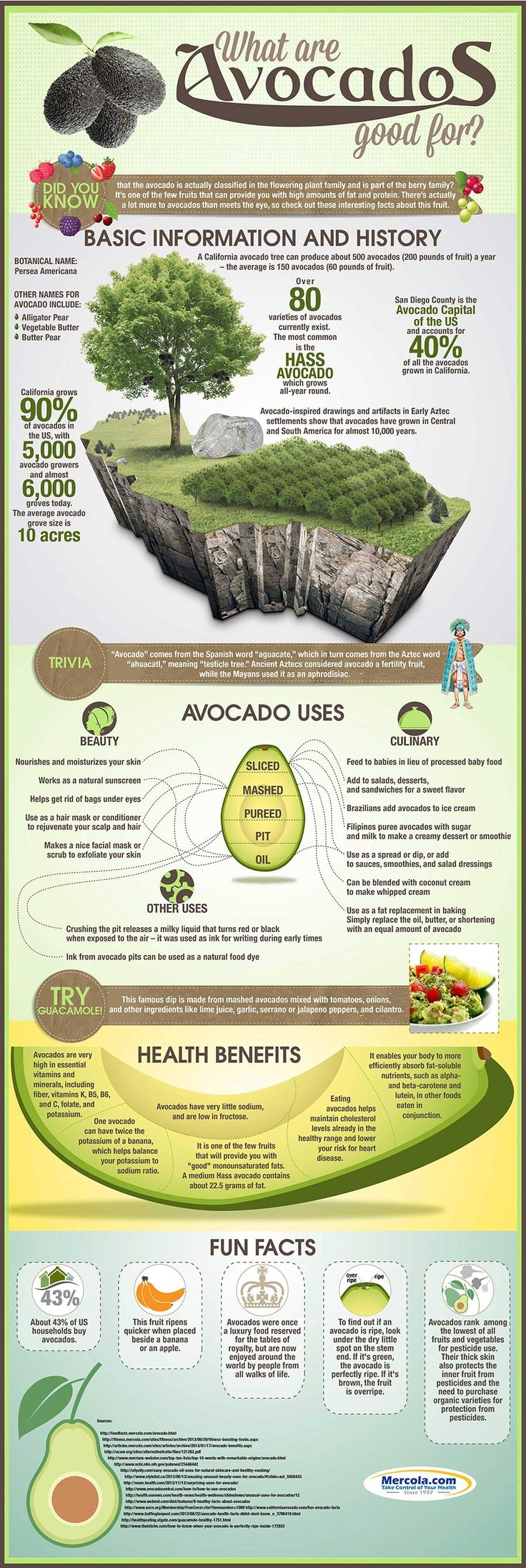 Look no further for the best avocado recipes to be found! Avocados are one of the best foods you can prepare. They bring a lot to the table in the form of healthy monounsaturated and polyunsaturated fats. They also have plenty of fiber. Here are the uses, health benefits and super delicious recipes