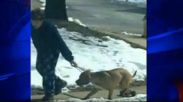 Virginia man ties weights to dog, pounds him and drags him around the streets! | YouSignAnimals.org