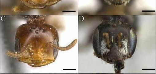Ant-like bees among newly discovered desert species: Brooks Hays LOGAN, England, Dec. 27 (UPI) -- Researchers at Utah State University have…