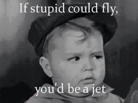 If stupid could fly, funny