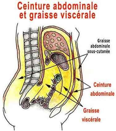 la ceinture abdominale est distendue par la graisse viscérale