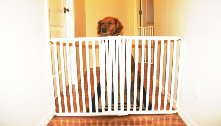 Rover Company Cat and Dog Gate, 18-Inch