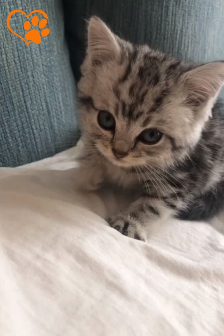 Humorous Cats/Kitten Compilation 2019 – Love Animals   Half 28