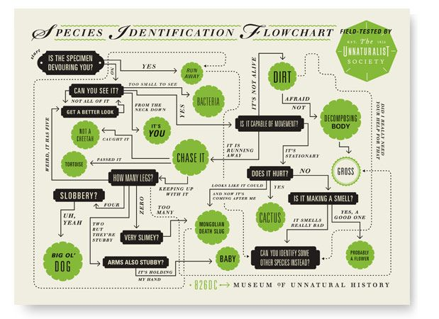 Species Identification Flowchart: Olives Munday, Flowing Charts, Identification Flowchart, Poster, Graphics Design, Graphics Projects, Infographic, Species Identification, Unnatural History